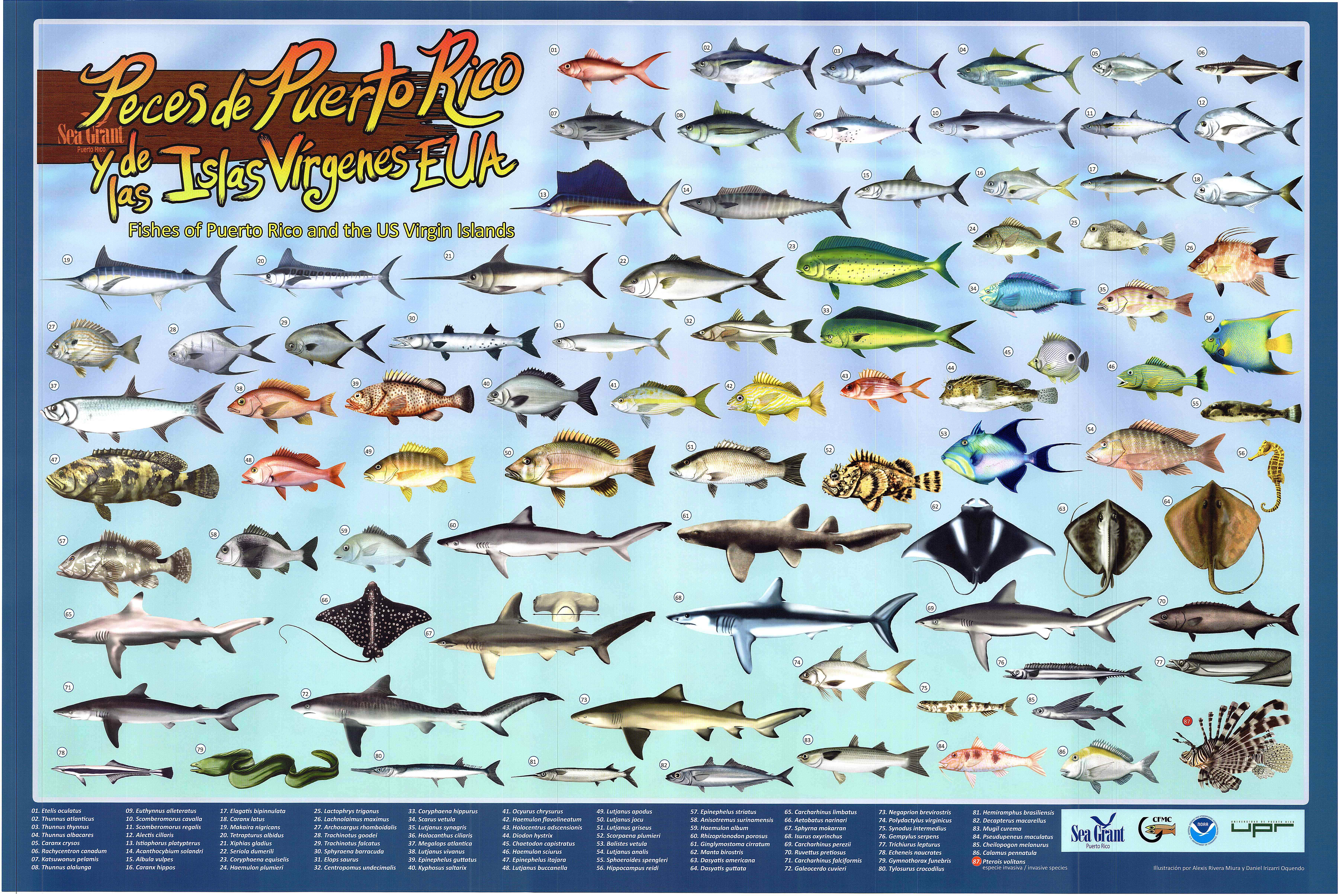 I made a best edible reef fish of puerto rico poster for Caribbean reef fish